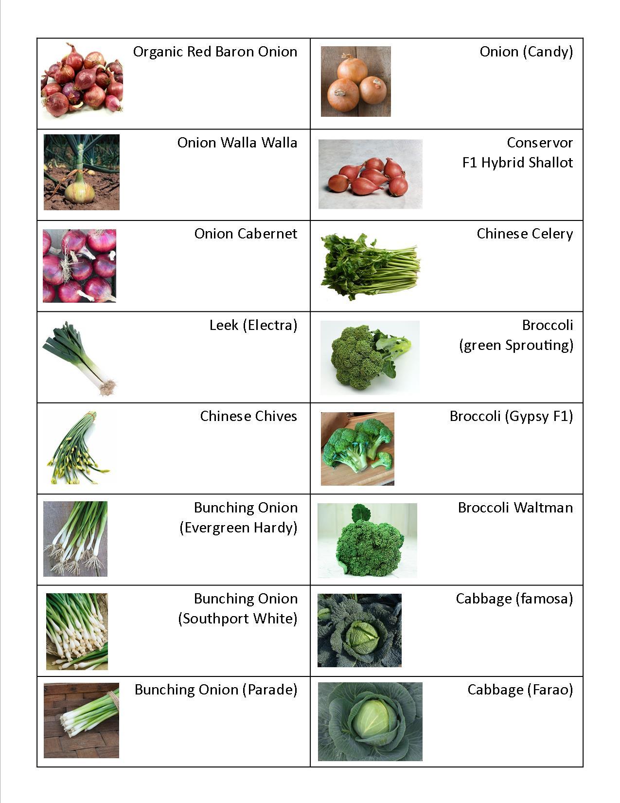 Onions, Broccoli, Celery