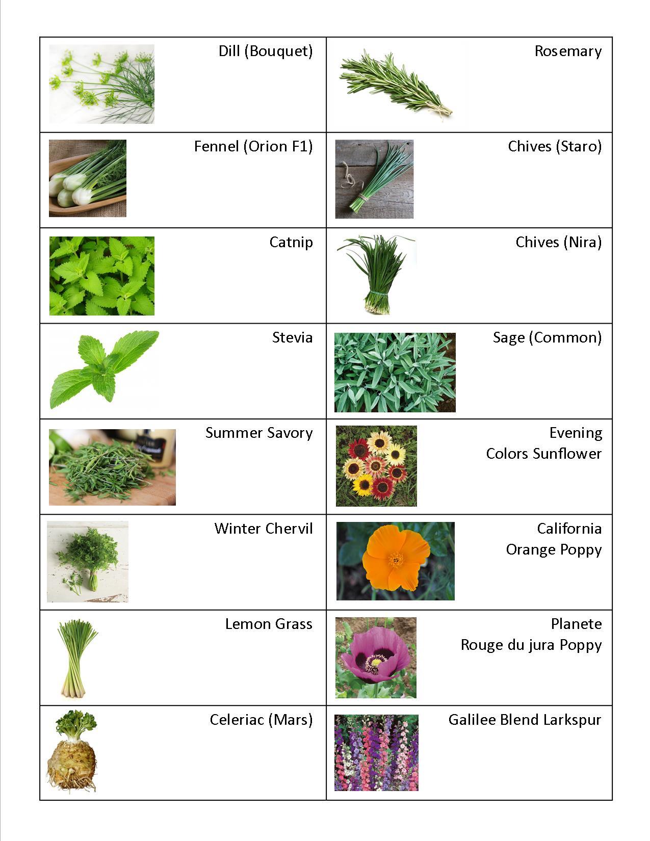 Herbs, Flowers