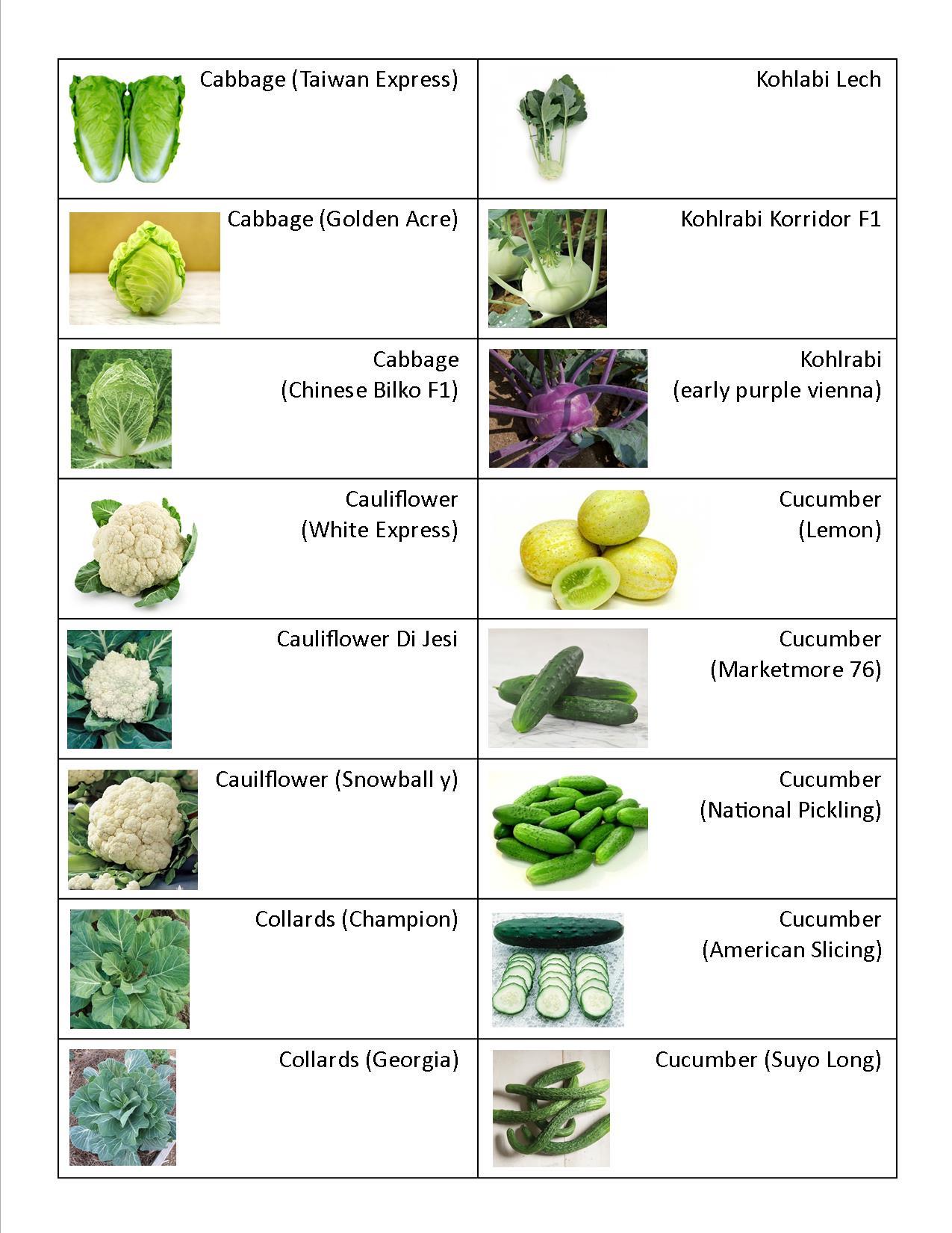Kohlrabi, Cauliflower, Cucumber, Cabbage