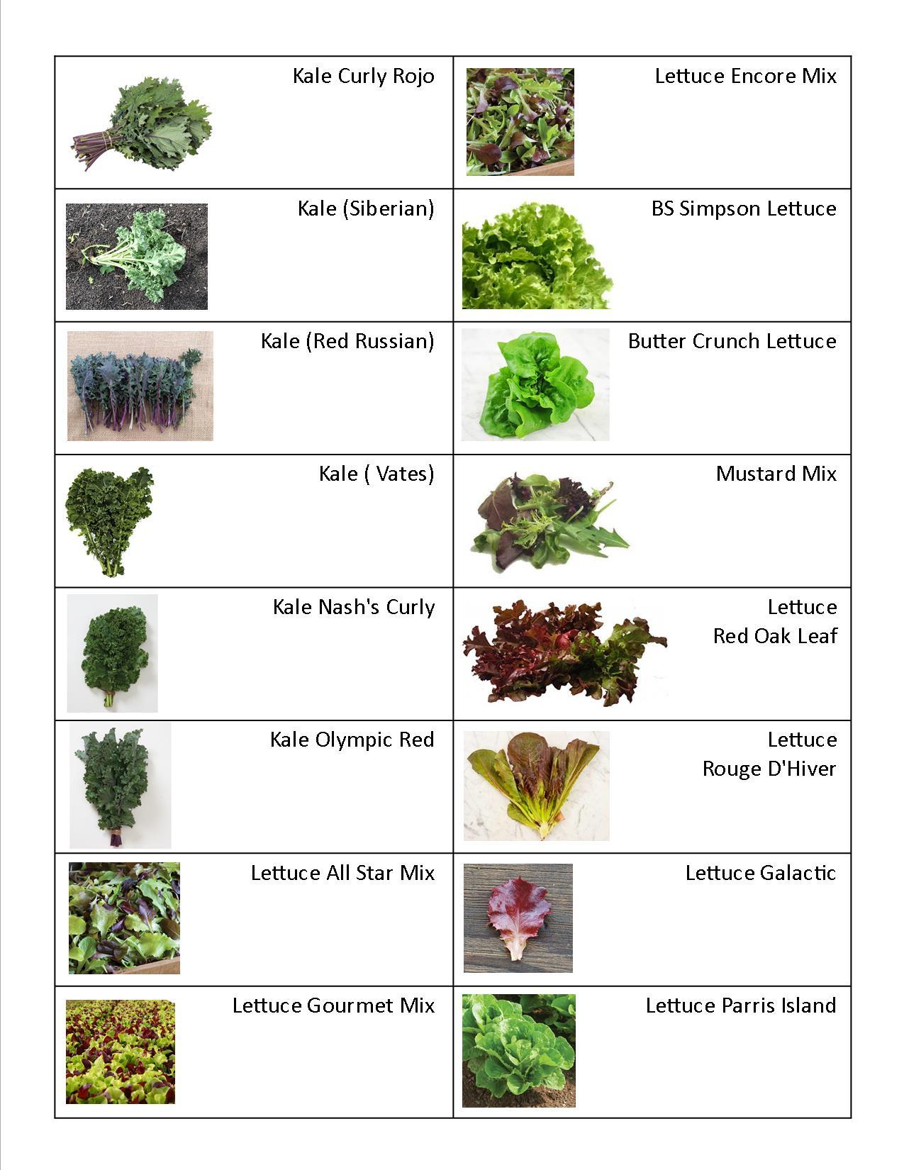 Kale, Lettuce